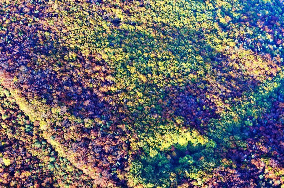 Vol d'été et d'automne