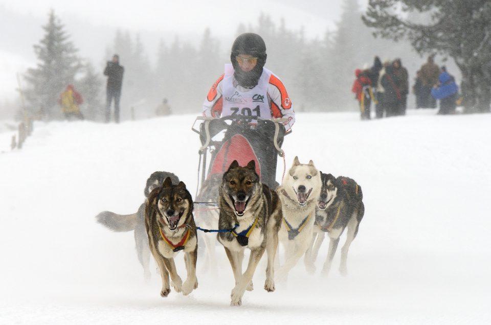 Course de chiens de traîneaux aux Estables