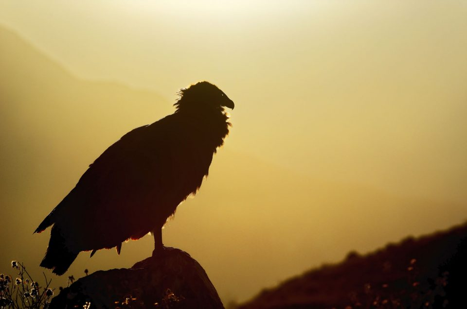 Au Pérou sous le vent des condors